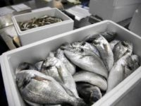 Новые требования ФСБ приведут к росту цен на рыбу